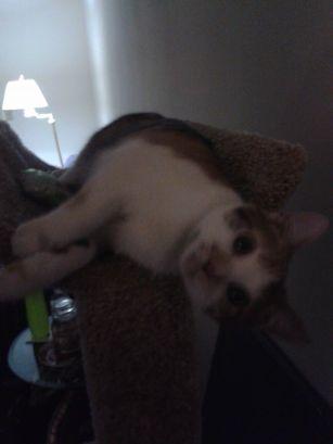 Pumpkin on Top of CatTree